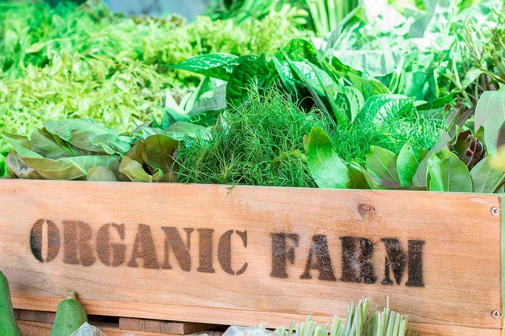 20 aniversario de IFOAM Organics Europe: hacer balance y mirar adelante